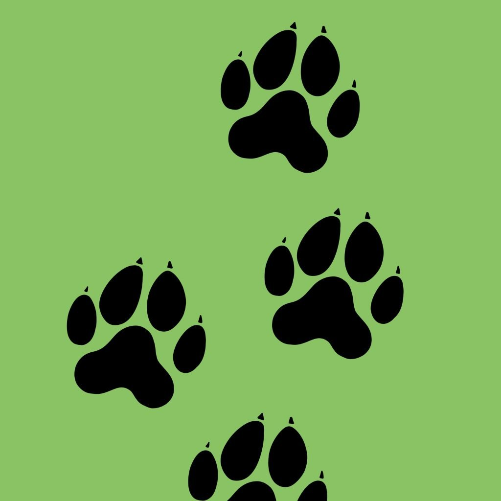 Drawing a dog paw print with 5 easy steps